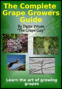 grapevine pests