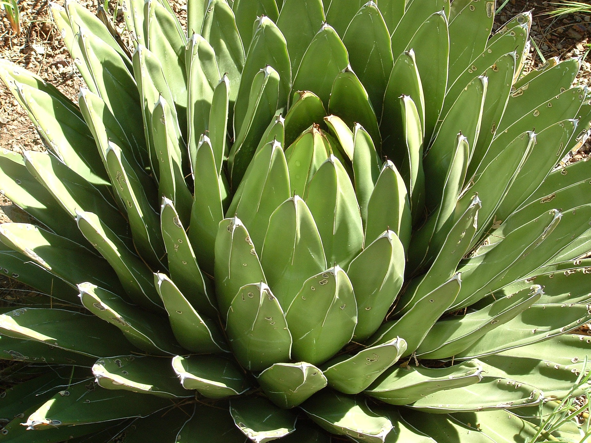 In the garden tips and comments for How much sunlight do succulents need
